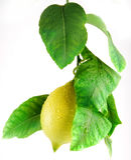 Lemon with leafs Stock Photos