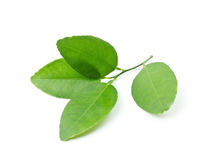 Lemon leaves Stock Photography