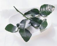 Lemon leaves  Stock Image