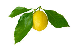 Lemon with leaves Royalty Free Stock Image