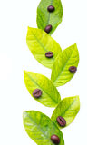 Lemon leaves and coffee beans Stock Photos