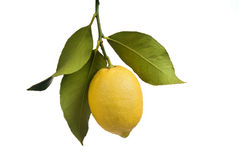 Lemon with leaves isolated Royalty Free Stock Photo