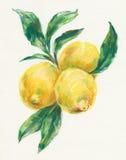 Lemons vector illustration