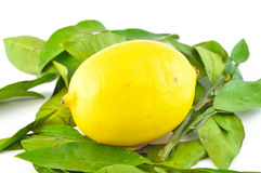 Lemon with leaves on a white background Royalty Free Stock Photo