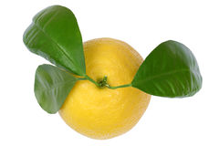Lemon lemons fruits top view isolated on white Royalty Free Stock Images