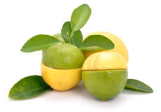 Lemon and lime. On isolated background royalty free stock image