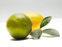 Lemon and lime. With leaf royalty free stock photo