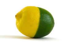 Lemon-lime. Half-lemon, half-lime merge as a one fruit, isolated on white background Stock Image
