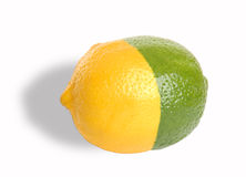 Lemon-Lime. Lemon lime hybrid concept fruit with shadow and clipping path Royalty Free Stock Images