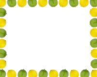 Lemon and lime border. Lemon and lime fruit border over white Stock Photos