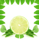 Lemon lime citrus fruit slice as background Royalty Free Stock Photo