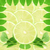 Lemon lime citrus fruit slice as background Stock Image