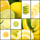 Lemon and lime collage Stock Images