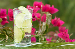 Lemon & Lime Drink Stock Images