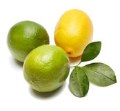 Lemon, lime and leaf Royalty Free Stock Photography