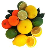 lemon lime orange grapefruit Royalty Free Stock Image