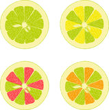 Lemon, lime, orange, pink grapefruit, pomelo collection of  illustrations on a transparent background Royalty Free Stock Photo