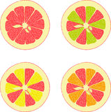 Lemon, lime, orange, pink grapefruit, pomelo collection of  illustrations Stock Photography