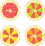 Lemon, lime, orange, pink grapefruit, pomelo collection of  illustrations Stock Image