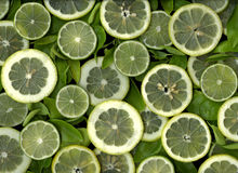 Lemon and Lime Slices. Lime and lemon slices in layers forming a pattern of green and yellow Royalty Free Stock Images