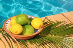 Lemon & Limes Stock Photography