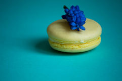 Lemon macaroon Stock Images