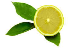 Lemon  macro leaf Royalty Free Stock Photography