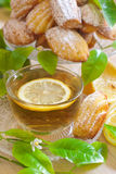 Lemon madeleines with tea. Sugar powdered lemon classic madeleines with lemon tea. Selective focus Royalty Free Stock Photo