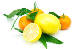 Lemon and mandarin with green leaves Royalty Free Stock Images