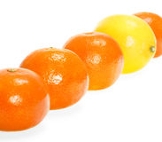 Lemon and mandarins Royalty Free Stock Images