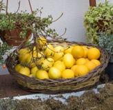 Lemon in the basket stock photo