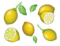 Lemon,  model with  EPS file Stock Images