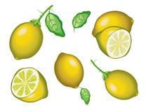 Lemon, model with EPS file stock illustration