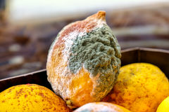 Lemon mold citrus fruits moldy Stock Photo