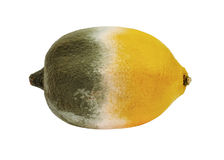 Lemon with mold Royalty Free Stock Images