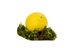 Lemon in the Moss Stock Images