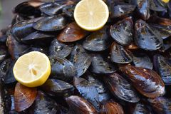 Lemon and mussels Stock Photography