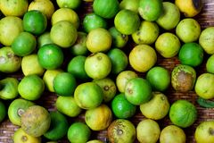 Lemon. Old rotten and fruit infected canker disease on basket bamboo Stock Photos