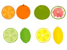 Citrus. Lemon, orange, grapefruit, lime. Vector stock illustration