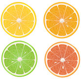 Lemon, orange, lime, grapefruit. Royalty Free Stock Images