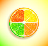 Lemon, orange, lime and grapefruit Stock Images