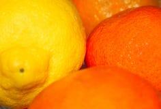 Lemon and oranges stock image