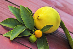 Lemon and other fruits. A yellow lemon and some other small fruits with their leaves Stock Photos