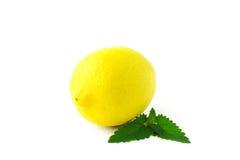 Lemon over white background Royalty Free Stock Photography