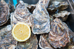 Lemon and oysters Royalty Free Stock Photography