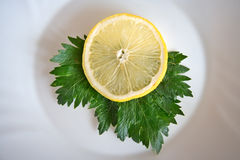 Lemon and parsley. Lemon slice and parsley leaf on plate Stock Image