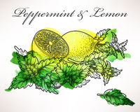 Lemon and peppermint Stock Photography