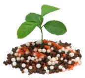 Lemon plant growing in chemical fertilizer Stock Photo