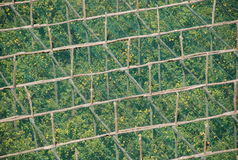 Lemon plantation Sorrento, Italy. Lemon plantation at Sorrento, Italy from above royalty free stock photos