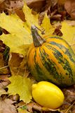 Lemon and pumpkin-yellow still-life. Lemon and pumpkin-yellow a still-life-all shades of yellow autumn Stock Photography